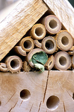 Leaf-cutter bee house