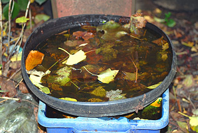 Dustbin lin bird bath with mud and leaves